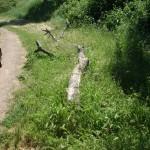 ramo secco di Olmo, Valle della Caffarella - May 14, 2013