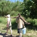 trasporto dei rami di Salice Bianco a studio.ra - May 14, 2013