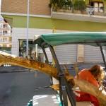 trasporto dei rami di Salice Bianco morto a studio.ra - May 14, 2013