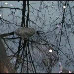"""Frame da video """"Il sacro Almone attende la rinascita"""" di Raffaella Losapio - Immagine del 27 marzo 2014, nel giorno della """"Lavatio Matris Deum"""". nel giorno della """"Lavatio Matris Deum"""" con Eleonora Del Brocco al Parco della Caffarella."""